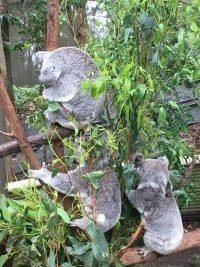 Currumbin Wildlife Santuary