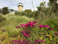 Robe Lighthouse and Penguins